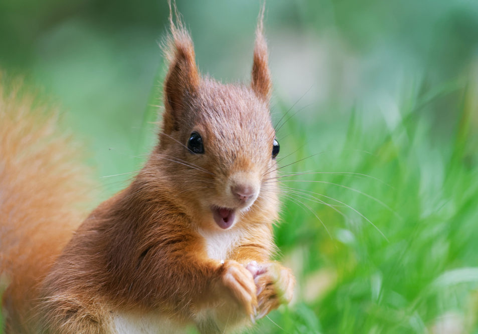 5 Surprising Facts About Squirrels