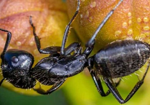 Top Non-Toxic Tips to Get Rid of Carpenter Ants
